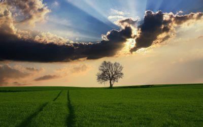 Kiedy usunięcie drzewa lub krzewu niewymaga zezwolenia?
