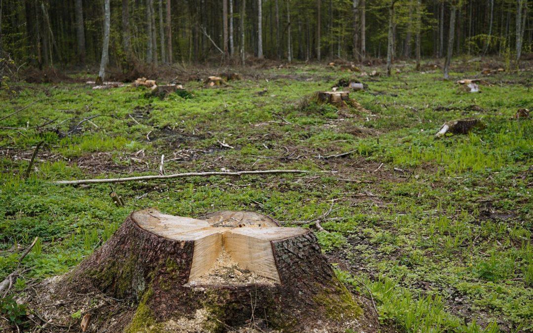 Nielegalna wycinka drzew ikrzewów